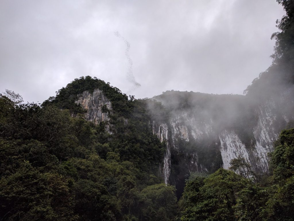 Bats fly out of the Deer Cave Gunung Mulu National Park Borneo