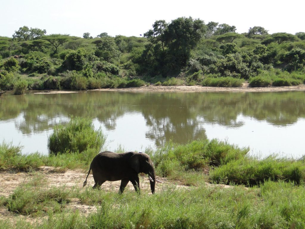 Elephant walks on bank at Lower Sabie Rest Camp South Africa