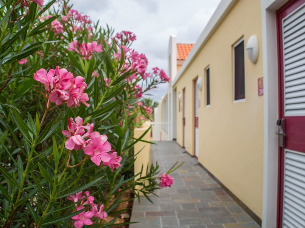Pink flowers near corridor with rooms Bayside Boutique Hotel Blue Bay Curaçao
