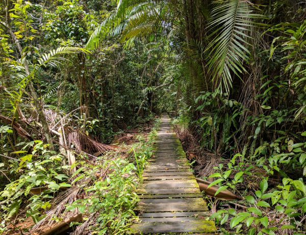 De 16 wandelingen in Bako National Park op Borneo
