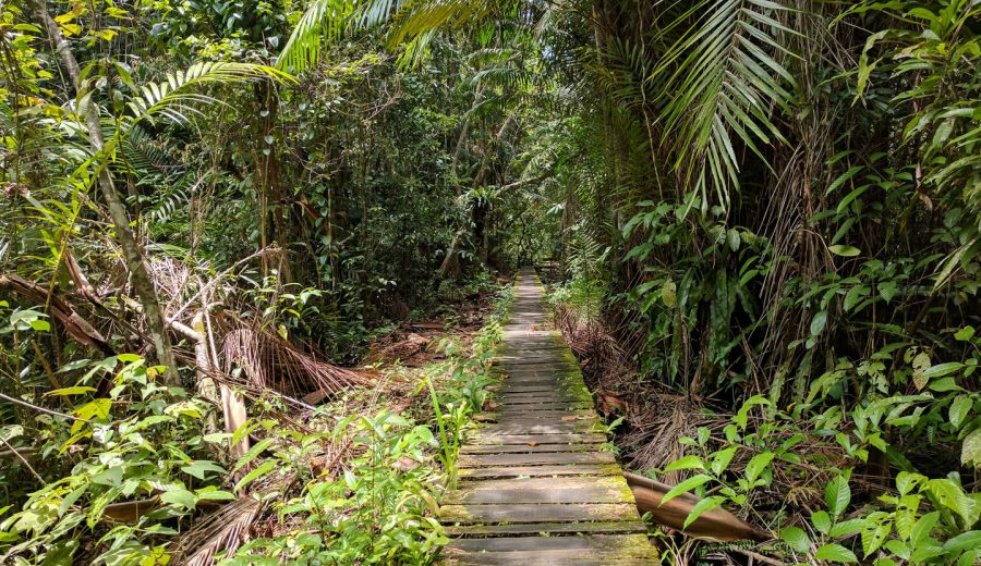The 16 hikes at Bako National Park on Borneo